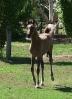 Undurra colt foal by Simeon Shiur