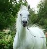 Undurra Tah'llia- pretty mare