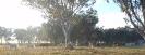 Undurra Arabians, Australia