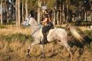Undurra endurance arabians... Undurra Shah Khan