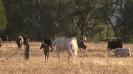 Undurra Mia and Simeon Shiur foal