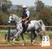 Simeon Saadli- great potential as a ridden arabian