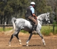 Simeon Saadli -opportunity to purchase this amazing colt