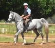 Simeon Saadli -a picture under saddle