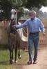 Simeon Shatah -show horse